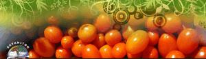 Bryanston Organic Market @ Market | Sandton | Gauteng | South Africa