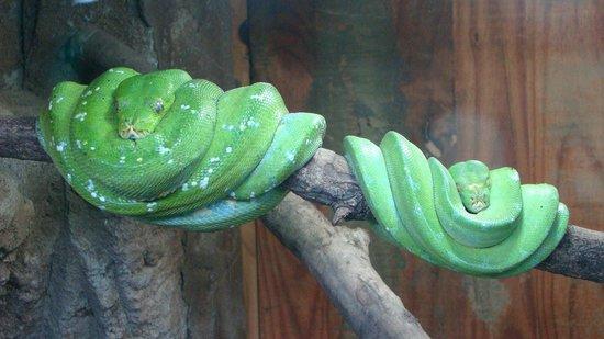 perry-s-bridge-reptile2